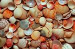 sea shellsimages